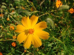 ooo a pretty flower.