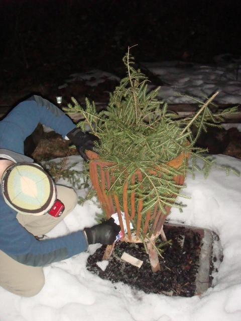 Starting the fire with pine needles